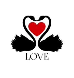 Two loving swans with heart on white background vector