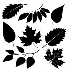 Black leaves silhouettes isolated on white vector