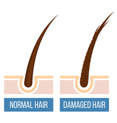 Hair care damaged hair vector