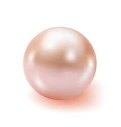 Pearl realistic isolated on white background vector image