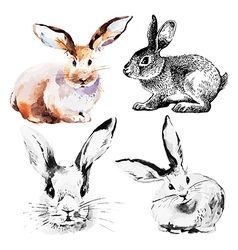 Set easter rabbits vector