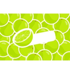 ripe lime vector image