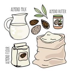 Almond food vegetarian paleo diet vector