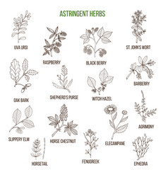 astringent herbs hand drawn set vector image