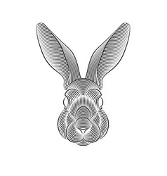 engraving stylized rabbit portrait on white vector image
