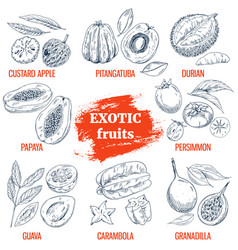 exotic fruits collection hand drawn vector image