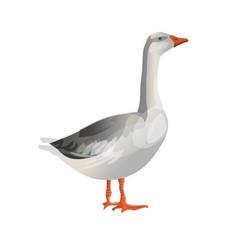 Grey goose standing vector