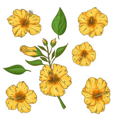 Hibiscus flowers set with leaves isolated on vector