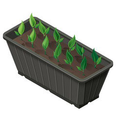 Isometric box with seedlings green plants shoots vector