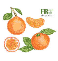 Orange isolated on white background fruit vector