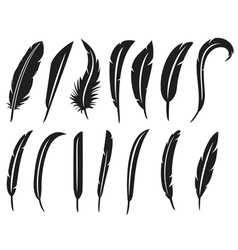 collection of feathers - feather collection vector image vector image