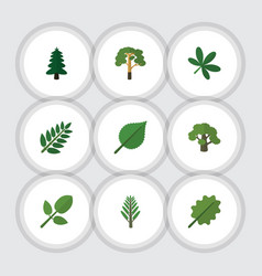 Flat icon natural set of jungle foliage acacia vector