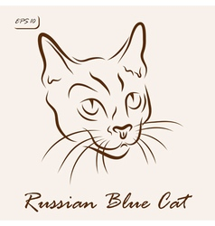 Russian Blue Cat vector image