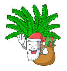 Santa with gift fresh fern branch isolated on vector