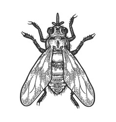 tsetse fly insect sketch engraving vector image
