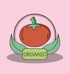 Fresh tomato organ fruits with leaves vector