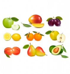 set of sweet fruit vector image
