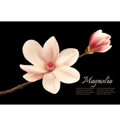 Beautiful white magnolia flower isolated on a vector