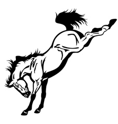 Bucking horse black white vector
