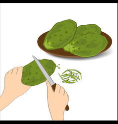 Edible green cactus leaves or nopales on white vector