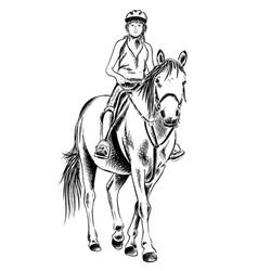 Horse rider sketch vector