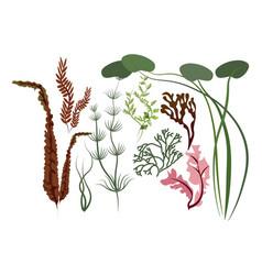 leaves set various algae vector image