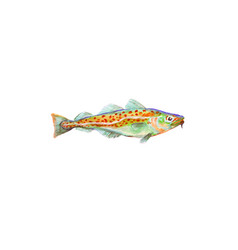 Watercolor painting codfish cod atlantic vector