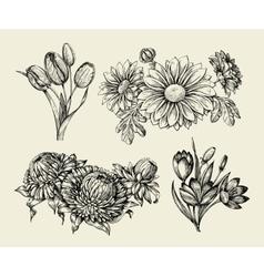 Flowers hand drawn sketch flower tulip astra vector