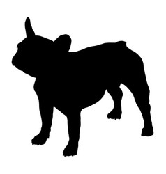 french bulldog silhouette vector image
