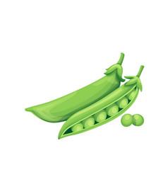 Green pea vector