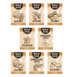 Price sketch posters of nuts and fruit seed vector