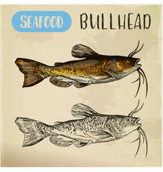 sketch of bullhead or sculpin fish vector image