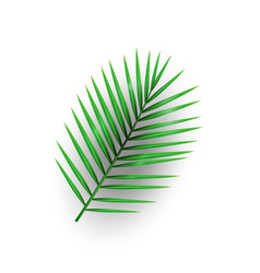 tropical palm leaf with shadow isolated on white b vector image