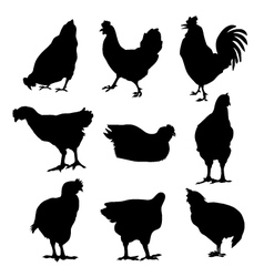Hen Cock silhouette set vector image