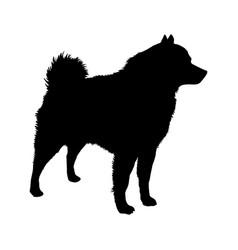 dog schipperke breed silhouette vector image