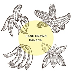 hand drawn banana fruits vector image