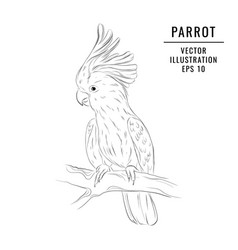 jungle parrot sketch hand-drawn wildlife bird vector image