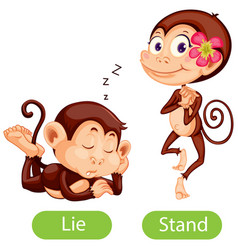 Opposite words with lie and stand vector