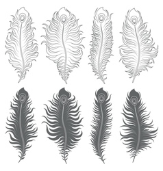 set of with peacock feathers vector image