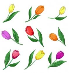 flower tulips set vector image