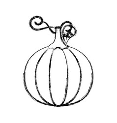 contour pumpkin vegetable icon vector image vector image