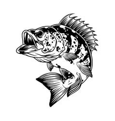 aggressive bass fish monochrome template vector image
