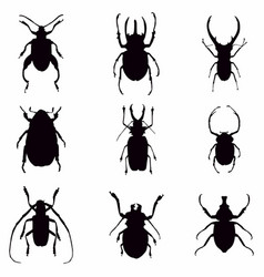 beetle bugs silhouette vector image
