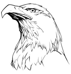 eagle on white vector image