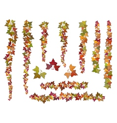 Set of brushes autumn ivy vine branches vector