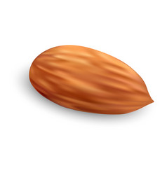 Almond nut icon realistic style vector