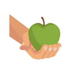 hand holding fresh green apple vector image