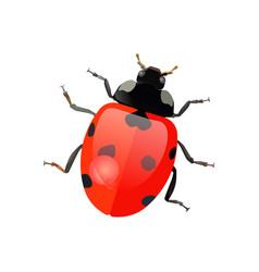set hand drawn ladybugs ladybirds vector image