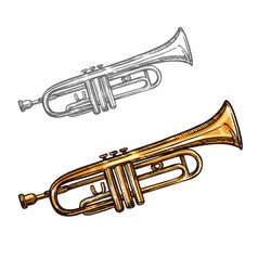 sketch trumpet musical instrument vector image
