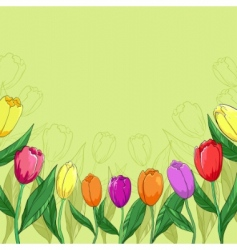flowers tulips on a green vector image